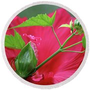 Buds Before Blooms Round Beach Towel