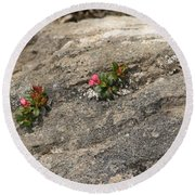 Buds Of Beauty Within Harshness Round Beach Towel
