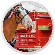 Budweiser Clydesdale In Full Dress Round Beach Towel