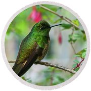 Buff-tailed Coronet Round Beach Towel