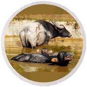 Water Buffalo Family Portrait Round Beach Towel