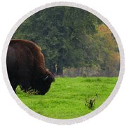 Buffalo In Spring Grass Round Beach Towel