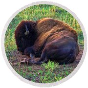 Buffalo In The Badlands Round Beach Towel