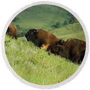 Buffalo On Hillside Round Beach Towel