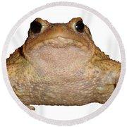 Bufo Bufo European Toad Isolated Round Beach Towel