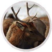 Bull Elk At Hardware Ranch 2 Round Beach Towel