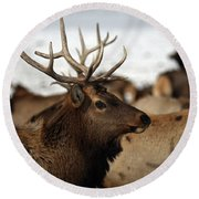 Bull Elk At Hardware Ranch Round Beach Towel