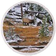Bull Elk Feeding In Winter Round Beach Towel
