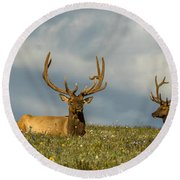 Bull Elk Friends For Now Round Beach Towel