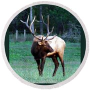 Bull Elk II Round Beach Towel