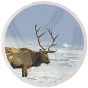 Bull Elk In Snow Round Beach Towel