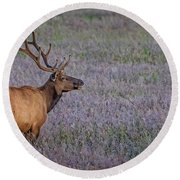 Bull Elk In Velvet Round Beach Towel