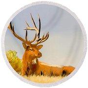 Bull Elk Resting In The Grass Round Beach Towel