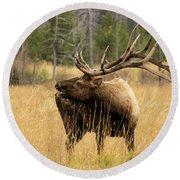Bull Elk Sideview Round Beach Towel