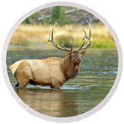 Bull Elk Wading The Madison River Round Beach Towel