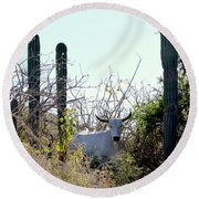 Bull In The Desert Of Mexico Round Beach Towel