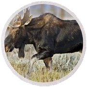 Bull Moose Crossing The Sage  Round Beach Towel
