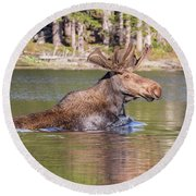 Bull Moose Goes For A Swim Round Beach Towel
