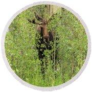 Bull Moose Guards The Aspen Round Beach Towel
