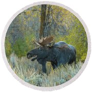 Bull Moose In The Evening Round Beach Towel
