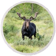 Bull Moose Stands Guard Round Beach Towel