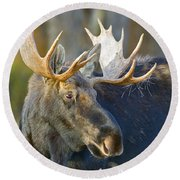 Bull Moose Up Close Round Beach Towel
