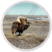 Bull Musk Ox Round Beach Towel