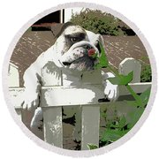 Bulldog Sniffing Flower At Garden Fence Round Beach Towel