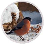 Bullfinch In The Snow Round Beach Towel