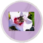 Bumble Bee Making His Escape From Hibiscus Flower Round Beach Towel