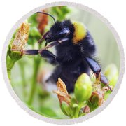 Bumble Bee On Flower Round Beach Towel