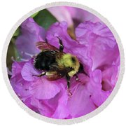 Bumble Bee On Rhododendron Blossoms Round Beach Towel