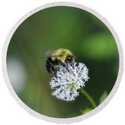 Bumble Bee On White Wild Flower On Banks Of Tennessee River At Shiloh National Military Park Round Beach Towel
