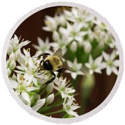 Bumble Bee On Wild Onion Flower Round Beach Towel