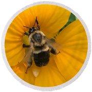 Bumble Bee On Yellow Nasturtium Round Beach Towel