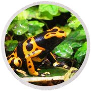 Bumble Bee Poison Frog Round Beach Towel