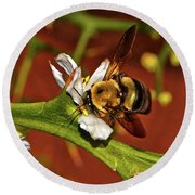 Bumblebee On A Hardy Orange Blossom 002 Round Beach Towel