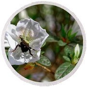 Bumblebee On White Azalea Round Beach Towel