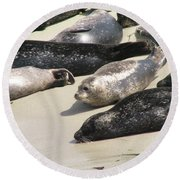 Bunch Of Harbor Seals Resting On A Beach Round Beach Towel