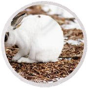 Bunnies Three Round Beach Towel