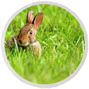 Bunny In Field  Round Beach Towel
