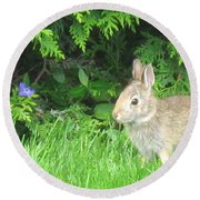 Bunny In Repose Round Beach Towel
