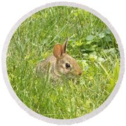 Bunny In The Grass Round Beach Towel