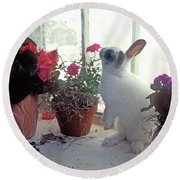 Bunny In Window Round Beach Towel