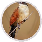 Burchell's Coucal - Rainbird Round Beach Towel