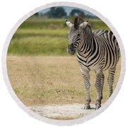 Burchell's Zebra On Grassy Plain Facing Camera Round Beach Towel