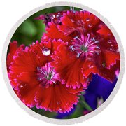 Burgandy Red Dianthus Round Beach Towel