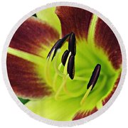 Burgundy And Yellow Lily Round Beach Towel