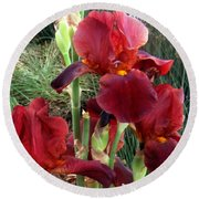 Burgundy Iris Flowers Round Beach Towel