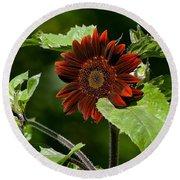 Burgundy Red Sunflower Round Beach Towel
